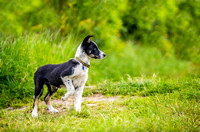 Pet photographers otley