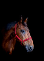 horse photography in otley