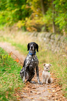Dog Portrait Photographer Harrogate